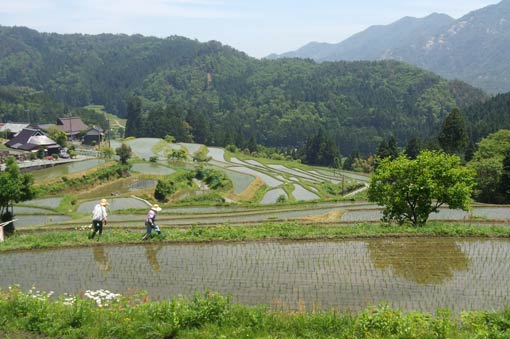 Rice terraces of Hata